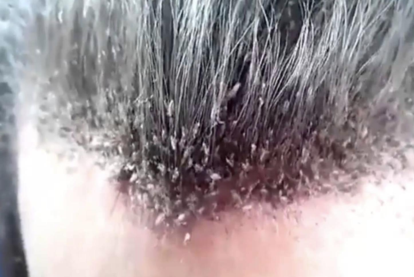 11 Horrific Hairdressing Nightmares