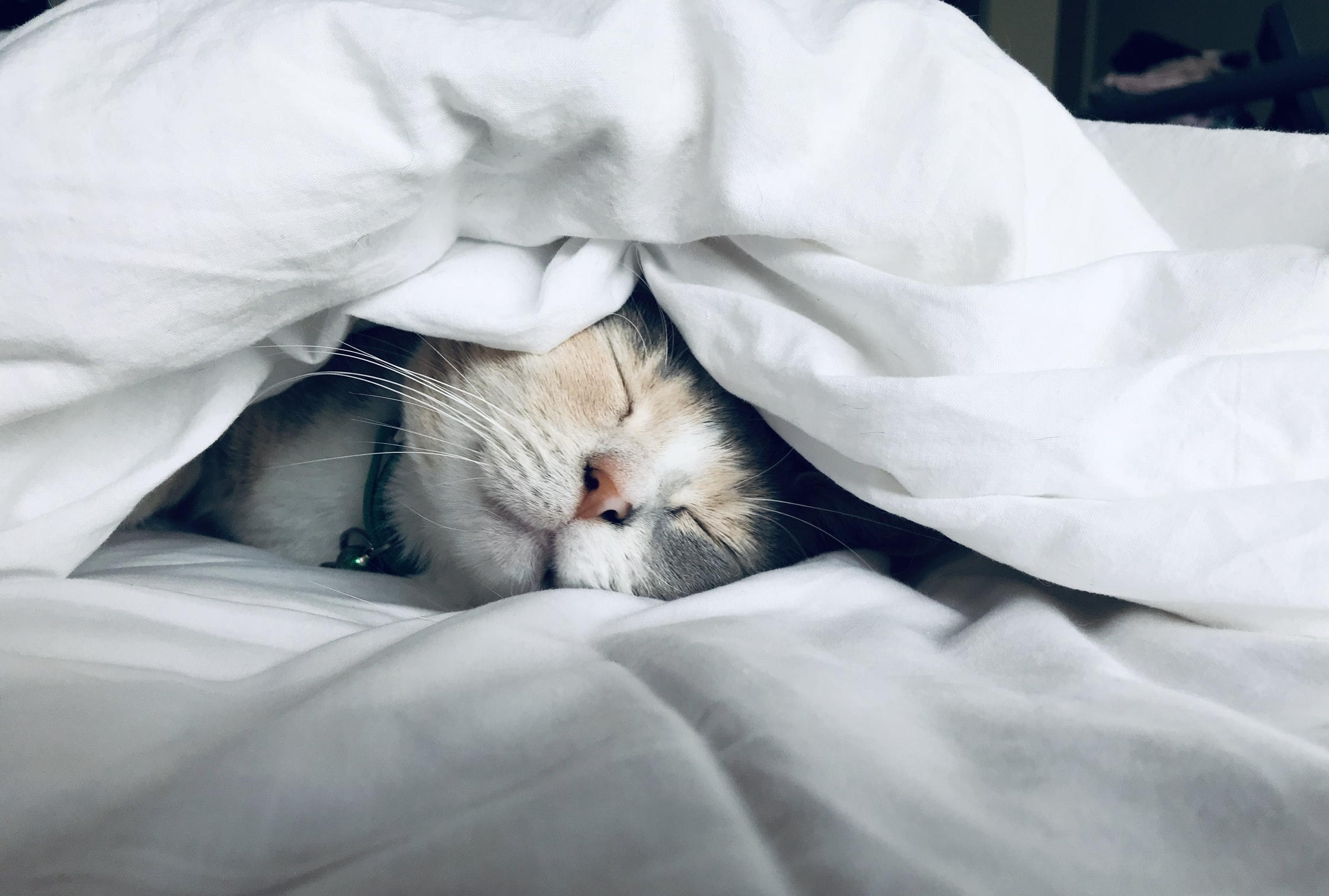 isolation self care tips cat sleeping in bed